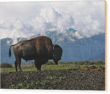Wood Print featuring the photograph Alaskan Buffalo by Katie Wing Vigil