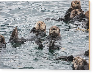 Alaskan Sea Otters Wood Print by Josh Whalen