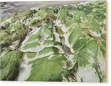 Algae Covered Rocks Wood Print by Georgette Douwma