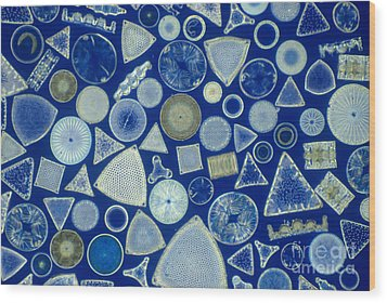 Algae, Fossil Diatoms, Lm Wood Print by M. I. Walker