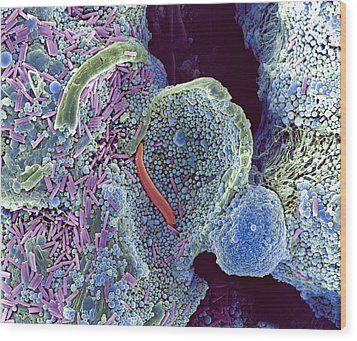 Algae In Soil, Sem Wood Print by Dr Jeremy Burgess