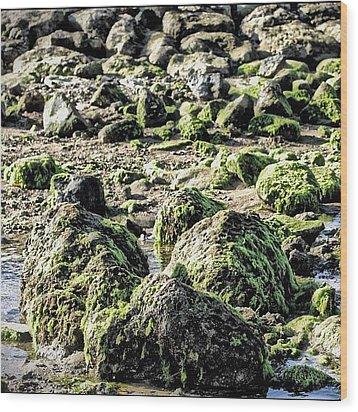 Algae Rocks Wood Print by Arya Swadharma