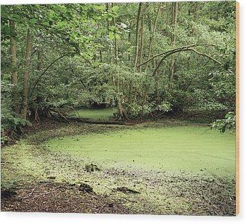 Algal Bloom In Pond Wood Print by Michael Marten