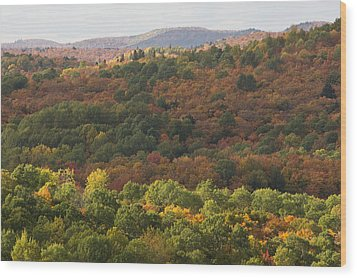 Algonquin In Autumn Wood Print by Cale Best