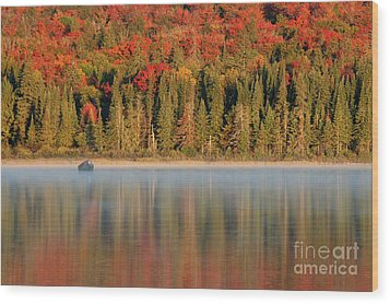 Algonquin Reflections Wood Print by Chris Hill