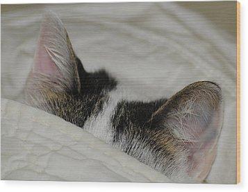 All Ears Wood Print by Wanda Brandon