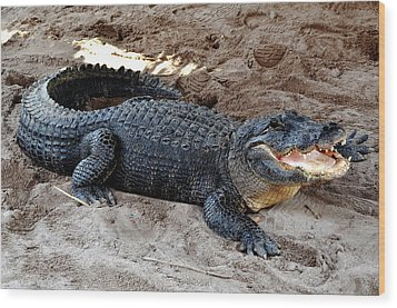 Wood Print featuring the photograph Alligator At The Everglades by Pravine Chester