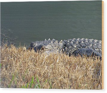Alligator Eyes Wood Print