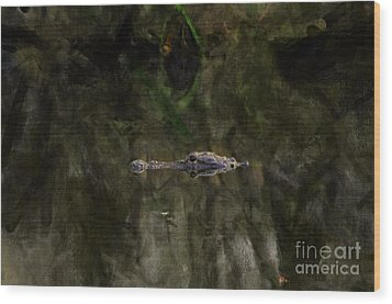 Wood Print featuring the photograph Alligator In Swamp by Dan Friend