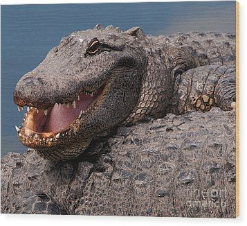 Wood Print featuring the photograph Alligator Smile by Art Whitton