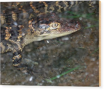 Alligator Wood Print by Suhas Tavkar