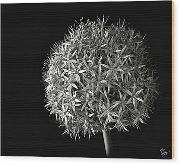 Wood Print featuring the photograph Allium In Black And White by Endre Balogh