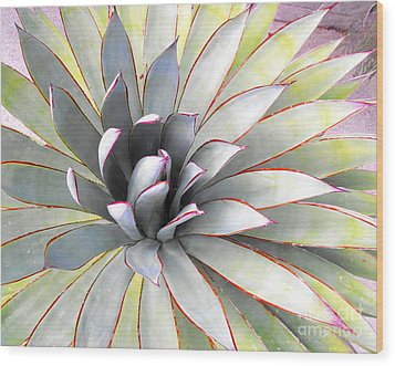 Wood Print featuring the photograph Aloe by Rebecca Margraf