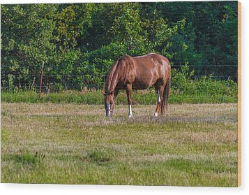 Alone In The Pasture Wood Print by Doug Long