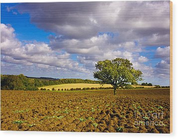 Alone On The Field  Wood Print by Radoslav Toth