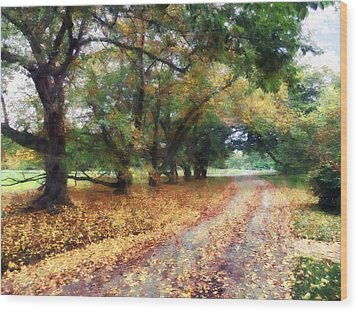 Along The Path Under The Trees Wood Print by Susan Savad