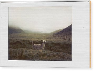 Alpaca Wood Print by photography by Pamela Abad