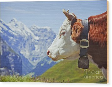 Alpine Cow Wood Print by Greg Stechishin