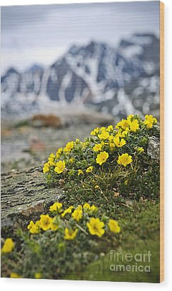 Alpine Meadow  Wood Print by Elena Elisseeva