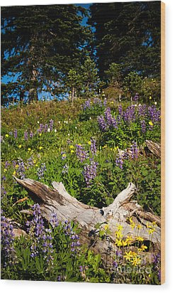 Wood Print featuring the photograph Alpine Wildflower Meadow by Karen Lee Ensley