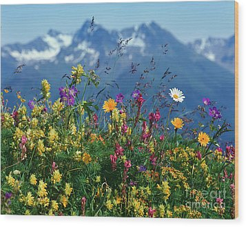 Alpine Wildflowers Wood Print by Hermann Eisenbeiss and Photo Researchers