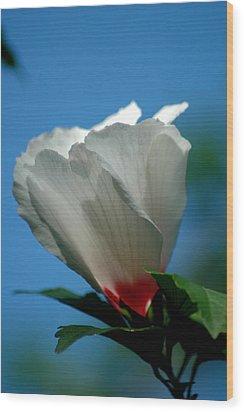 Althea Flower Wood Print by David Weeks