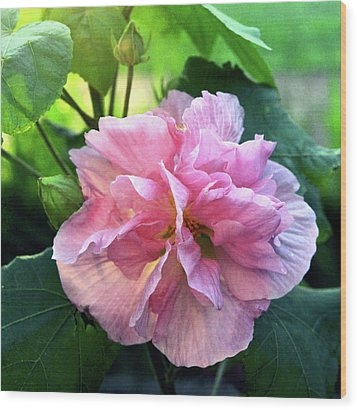 Althea Rose Of Sharon Wood Print by Kevin Smith