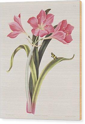 Amaryllis Purpurea Wood Print by Robert Havell