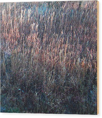 Amazing Grass Two Wood Print by Ric Soulen