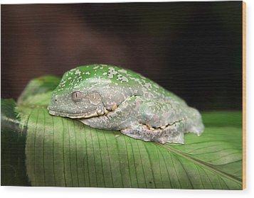 Amazon Leaf Frog Wood Print by Brad Granger