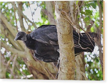 Wood Print featuring the photograph Amercan Black Vulture by Pravine Chester