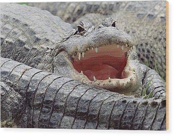 American Alligator Alligator Wood Print by Tim Fitzharris