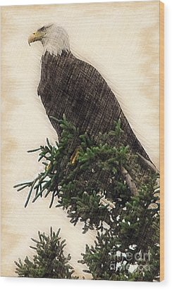 American Bald Eagle In Tree Wood Print by Dan Friend