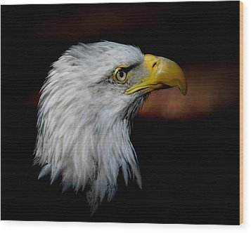 Wood Print featuring the photograph American Bald Eagle by Steve McKinzie