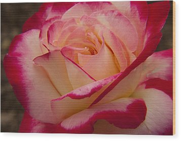 Wood Print featuring the photograph American Beauty Rose by Darleen Stry