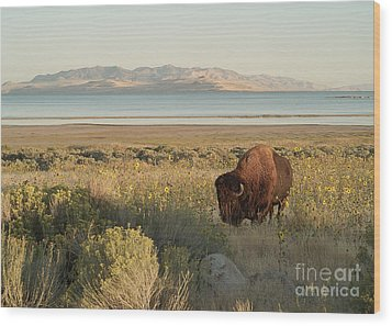 Wood Print featuring the photograph American Bison Antelope Island Utah by Doug Herr