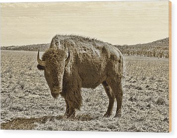 American Bison In Gold Sepia- Right View Wood Print by Tony Grider