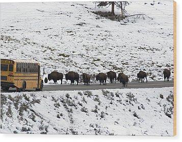 American Bison In The Road Halt Traffic Wood Print by William Allen