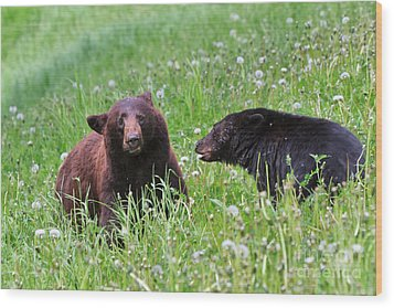 American Black Bear With Cub Wood Print by Louise Heusinkveld