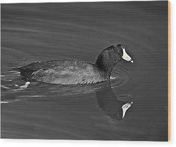 American Coot Wood Print by Bob and Nadine Johnston