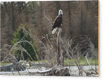 Wood Print featuring the photograph American Eagle On Snake River by Living Color Photography Lorraine Lynch