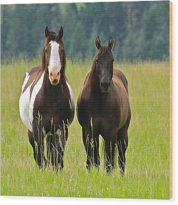 American Paint Stallion And Mare Wood Print by Karon Melillo DeVega