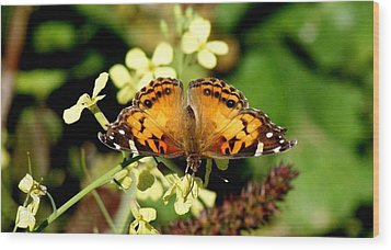 American Painted Lady I Wood Print by Bruce W Krucke