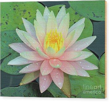 American Water Lilies Nine Wood Print by J Jaiam