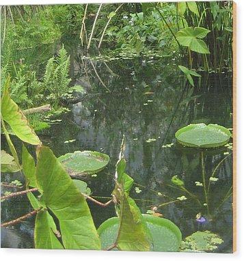 Among The Lily Pads Wood Print