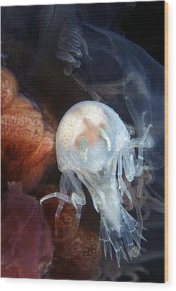 Amphipod Inside A Lion's Mane Jellyfish Wood Print by Alexander Semenov