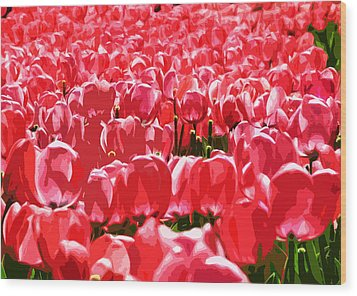 Amsterdam Tulips Wood Print by Phill Petrovic