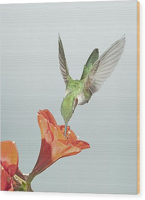 Amyrillis And Broadtailed Hummingbird Wood Print by Gregory Scott