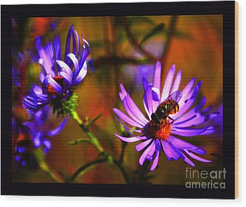 An Afternoon Bee In The Asters Wood Print by Susanne Still
