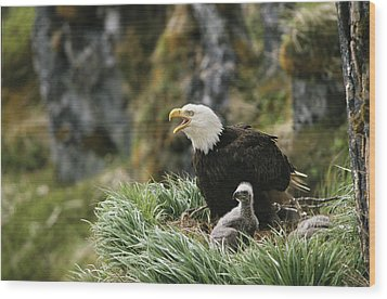 An American Bald Eagle And Young Wood Print by Klaus Nigge